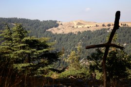 The Cedar forest in the mountanside outside of Byblos